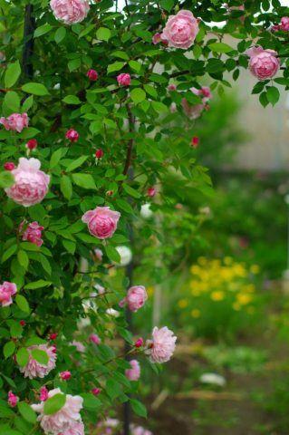 | Garden |