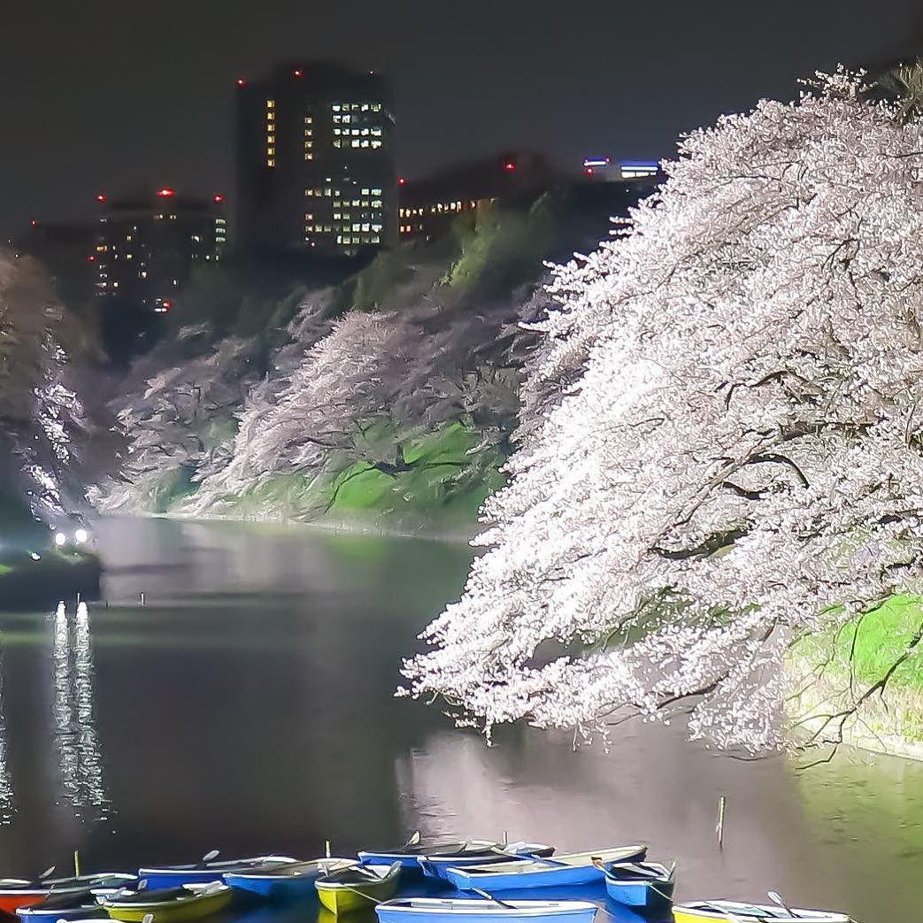 東京都千鳥ヶ淵の夜桜 2016/3/31  2016/4/12  M3 ---------------------------------------- 夜桜を振り返って 平野部の桜も終わり山間部にシフトしてきましたね 行きたいところは沢山あれど身は一つ天気と相談して無理なく行こうかな それにしても最近天気に恵まれないな やはり風光明媚な景色と共に桜も楽しみたいですね  それと大変申し訳ないのですが最近訪問出来てません 折見て訪問したいと思ってますので宜しくお願いします 今日は千鳥ヶ淵で個人的に好きな場所 奥行き感のあって桜の木々のカッコ良いのが好きです -------------------------------------- #東京都 #千鳥ヶ淵 #夜桜 #桜 #icu_japan #Lovers_Nippon #team_jp_ #team_jp_東 #wu_japan #ig_japan #Loves_Nippon #ig_today #igs_asia #ig_sharepoint #bestjapanpics #loves_asia #bns_japan…