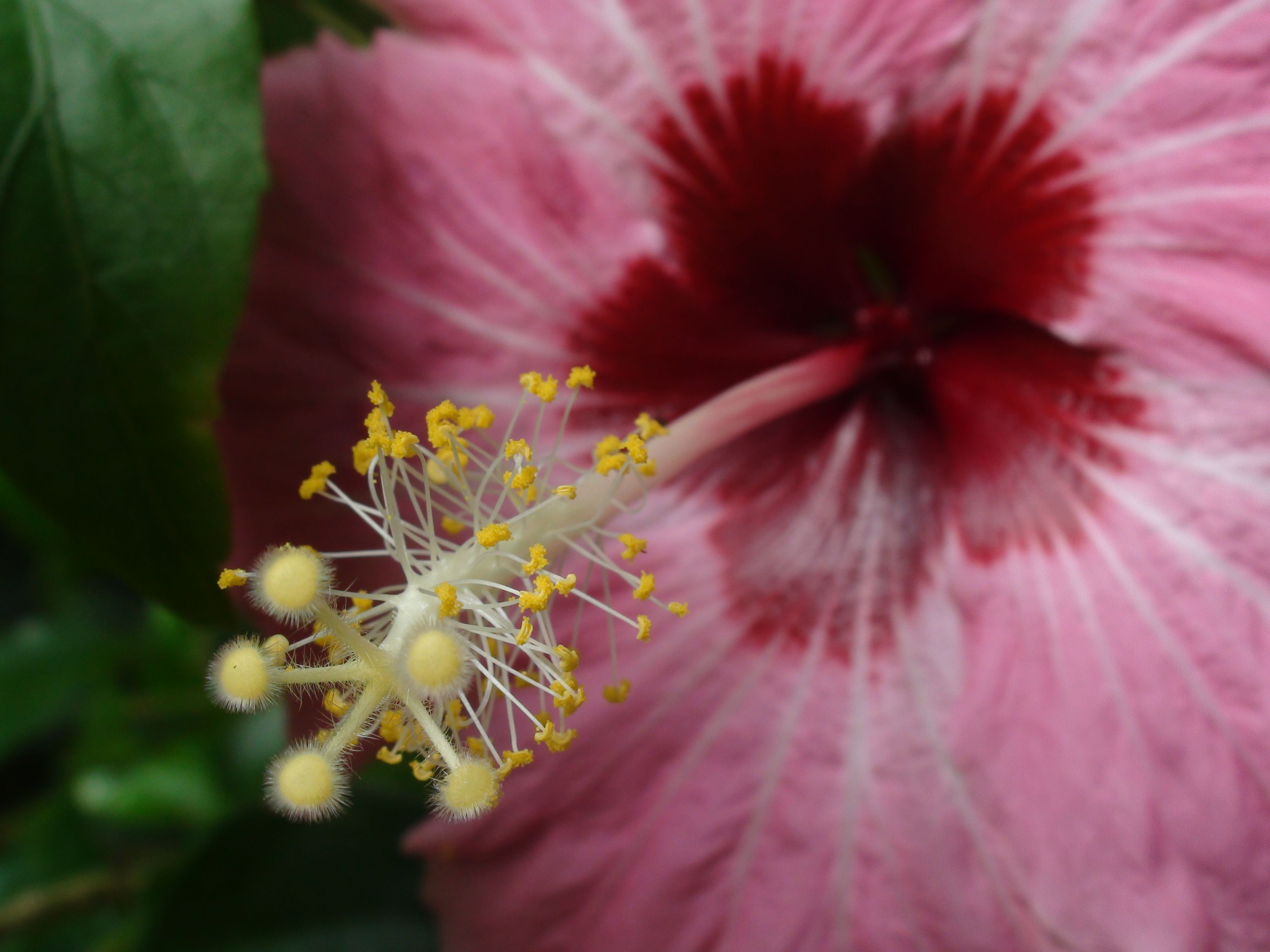 Why Do Flowers Need Pollen? ProFlowers Blog Proflowers