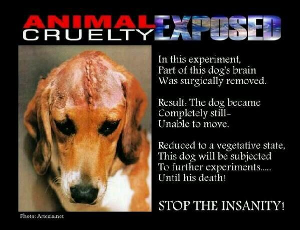 Animal Cruelty Esposed Dog Brain Animal Cruelty Stop Animal