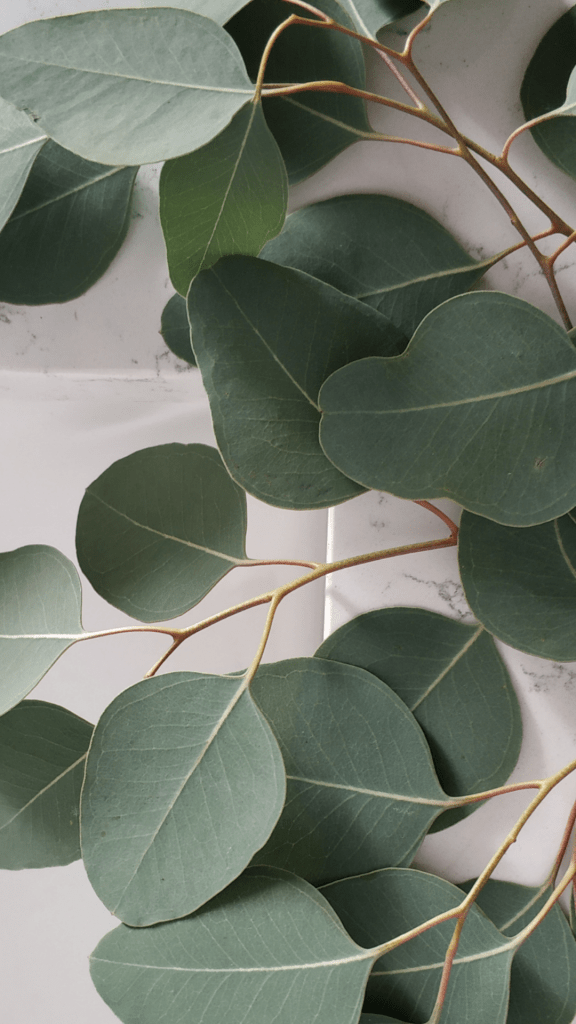 The Ultimate Guide To Free Sage Green Aesthetic Wallpaper | Just Jes Lyn