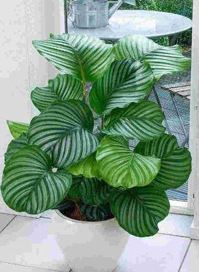 Zimmerpflanzen Schatten 12 plantas capazes de sobreviver no canto mais escuro da sua casa