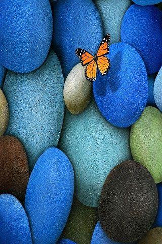 Best Mobile Wallpapers Butterfly Wallpaper Blue Butterfly Wallpaper Stone Wallpaper Full hd butterfly stone wallpaper