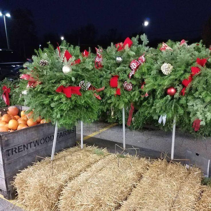#christmasmood #christmas #christmasdecorations #christmasdecor #holiday #holidays #holiday #topiaries. Fresh holiday topiaries. They are so pretty! . .