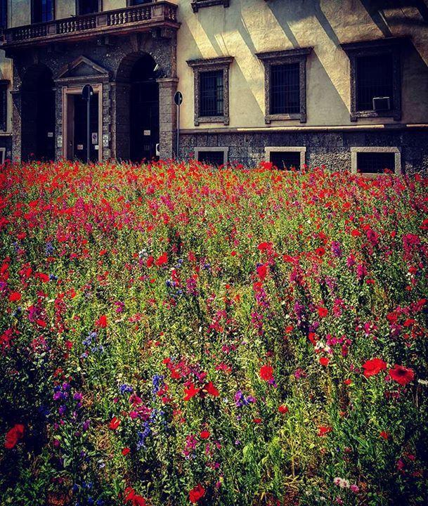 Buongiorno #Milano Da piazza Beccaria lo scatto di Antoine Laguerre #milanodavedere Milano da Vedere