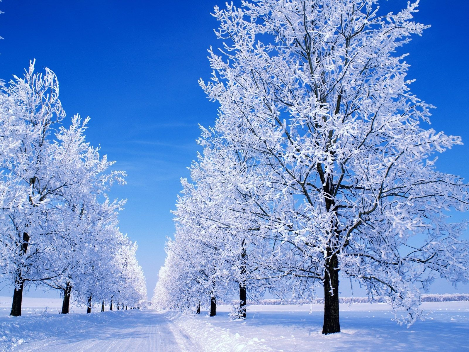 Winter scenes 1600x1200 great winter snowy scene desktop winter scenes 1600x1200 great winter snowy scene desktop wallpapers and stock photos voltagebd Image collections