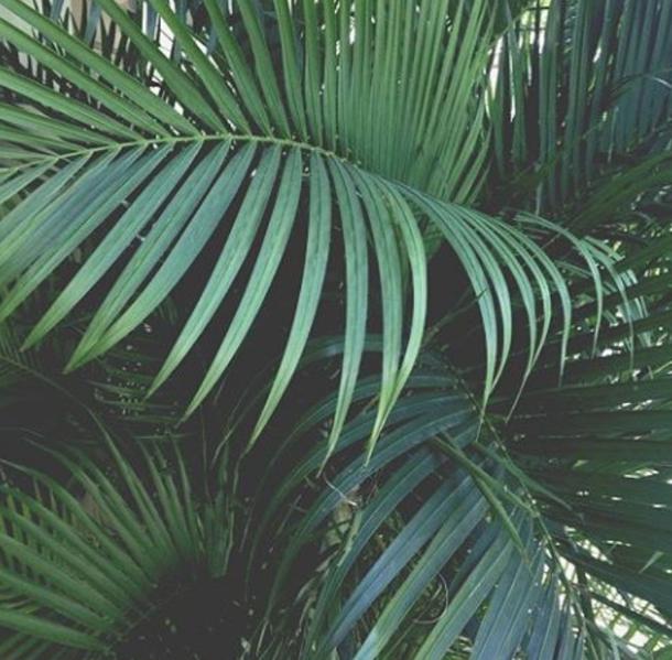 aesthetic, plants, tumblr | P L A N T S | Plant aesthetic