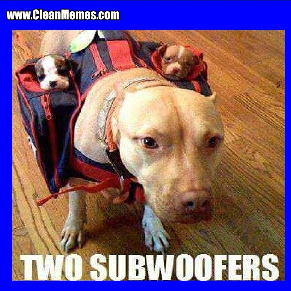 Funny Dog Meme Clean : Dog memes clean the best most online funny