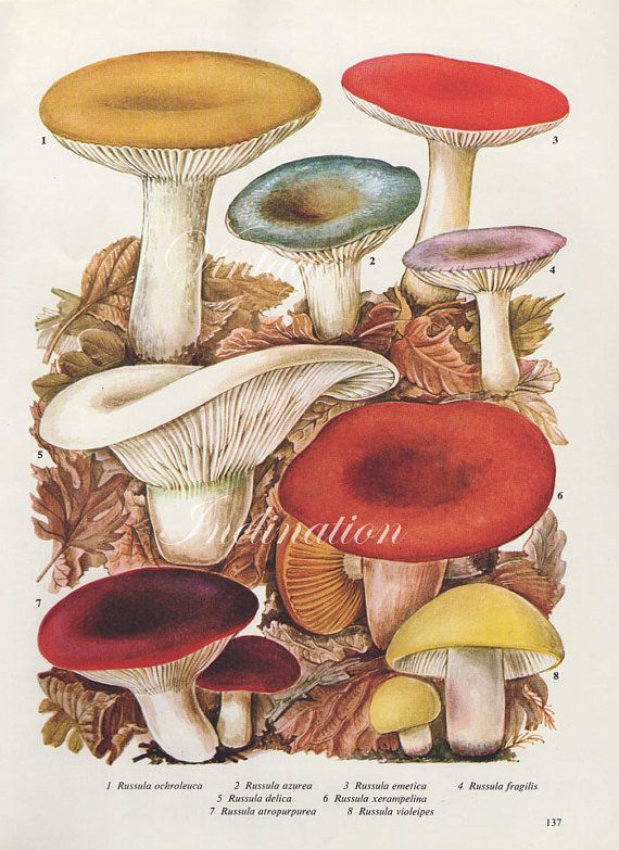 Vintage Mushroom Print I Want This For My Kitchen Inspiration Bird Prints Art Nature Wall Art
