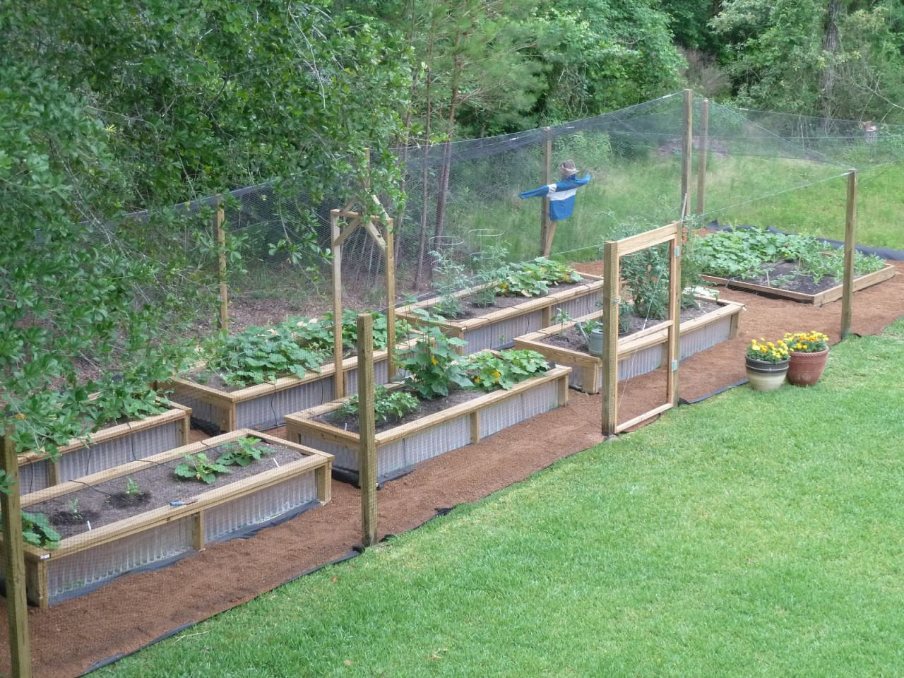 Week 6: Diseases, Garden Paths, and Outriggers (never a dull moment)