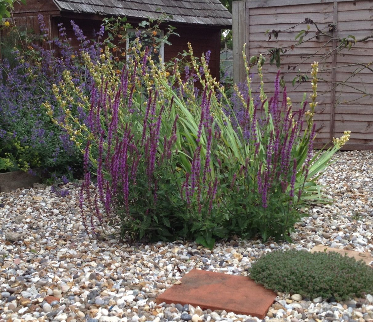 Suffolk Gravel Garden garden ideas Pinterest Gardens