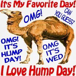4cc363b71358 new years day hump | Happy Hump Day Underwear, Happy Hump Day Panties,  Underwear for Men .