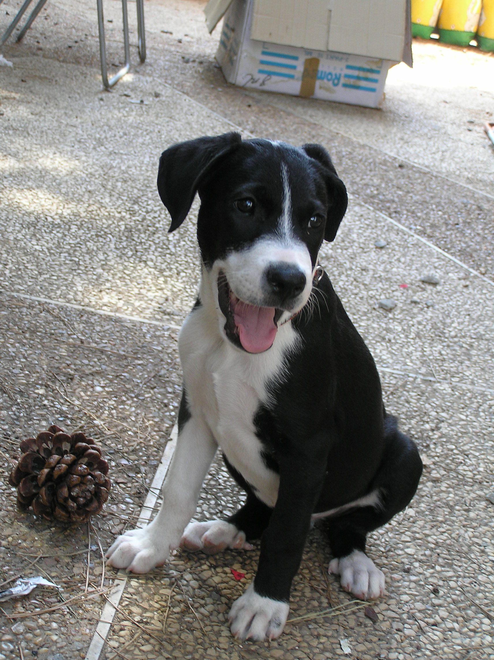 St. Johns County Pet Center Closed for Mega Adoption Event