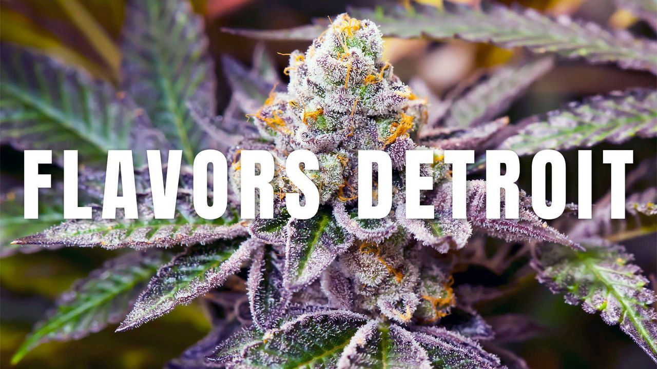 18 Best MMJ Dispensaries images in 2018 | Detroit, Detroit