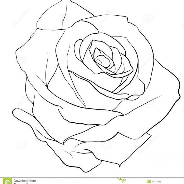 Rose Tattoo Tattoo Collection Page 89 Rose Outline Rose Drawing Roses Drawing