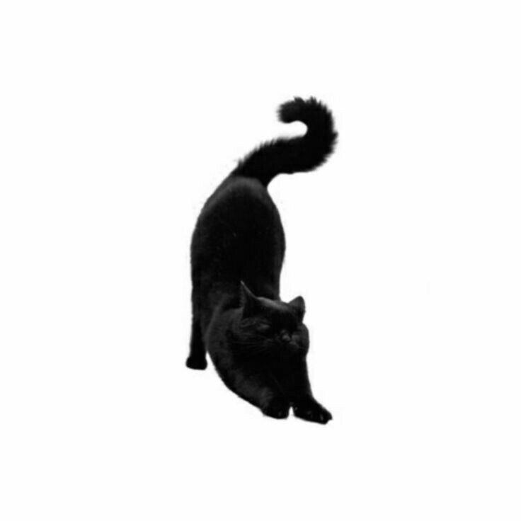 Pin By V On Women Of Marvel Black Cat Cats Coraline Jones