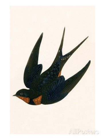 Oriental Chimney Swallow Giclee Print