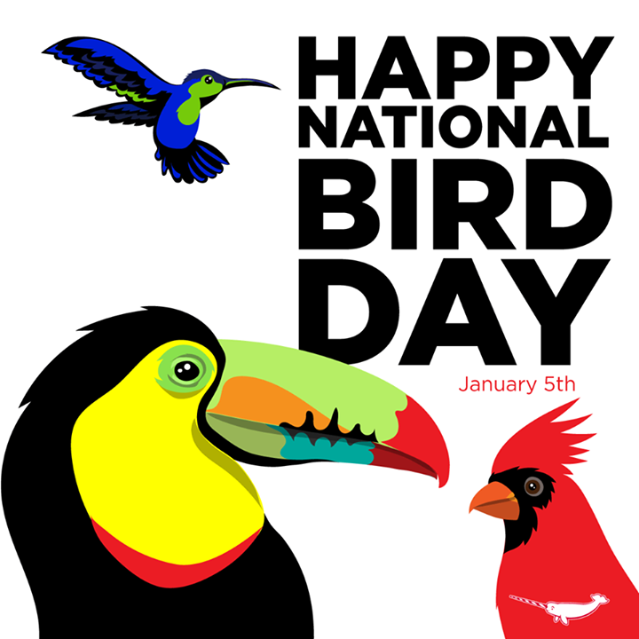 January 5 is National Bird Day. Be thankful and protect