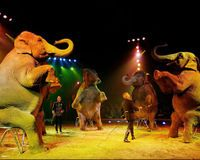 Ban Wild Animals in Circuses in the UK