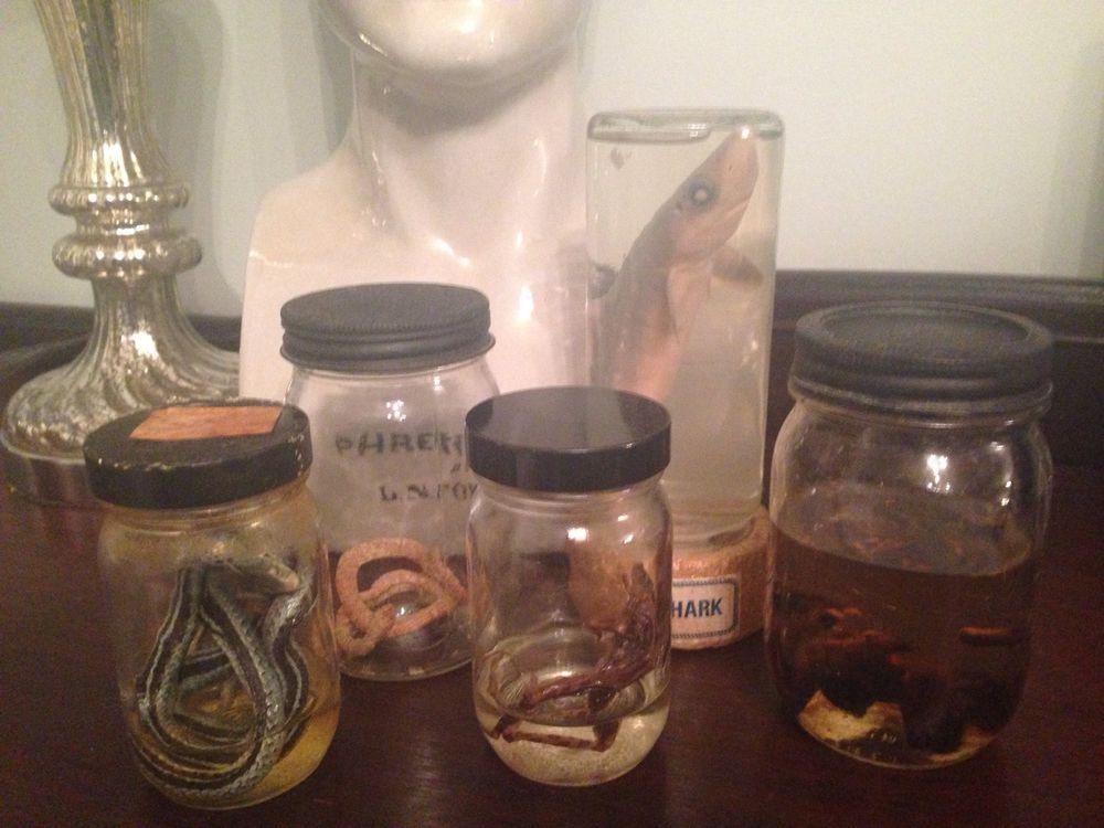 Gross Lab Experiment MAD SCIENTIST Halloween Prop SPECIMEN JARS - mad scientist halloween decorations