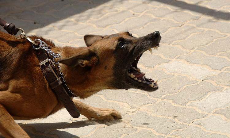 愛犬のムダ吠えが止まらない時、ただその場で叱るだけで本当に大丈夫だと思いますか?