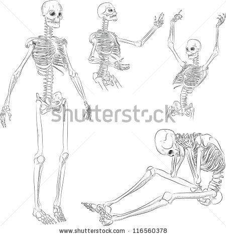 human skeleton drawing in several active poses by eugenia, Skeleton