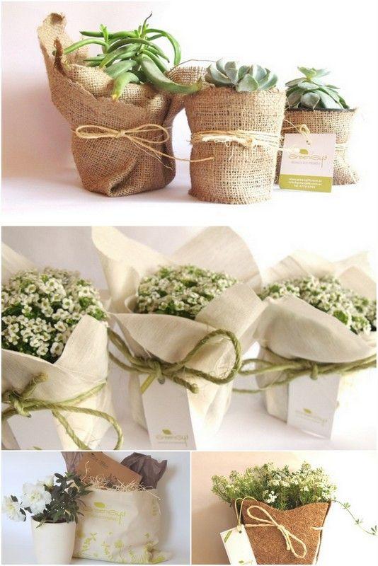 Recuerdos Matrimonio Rustico : Plantas envueltas wedding flowers pinterest envuelto