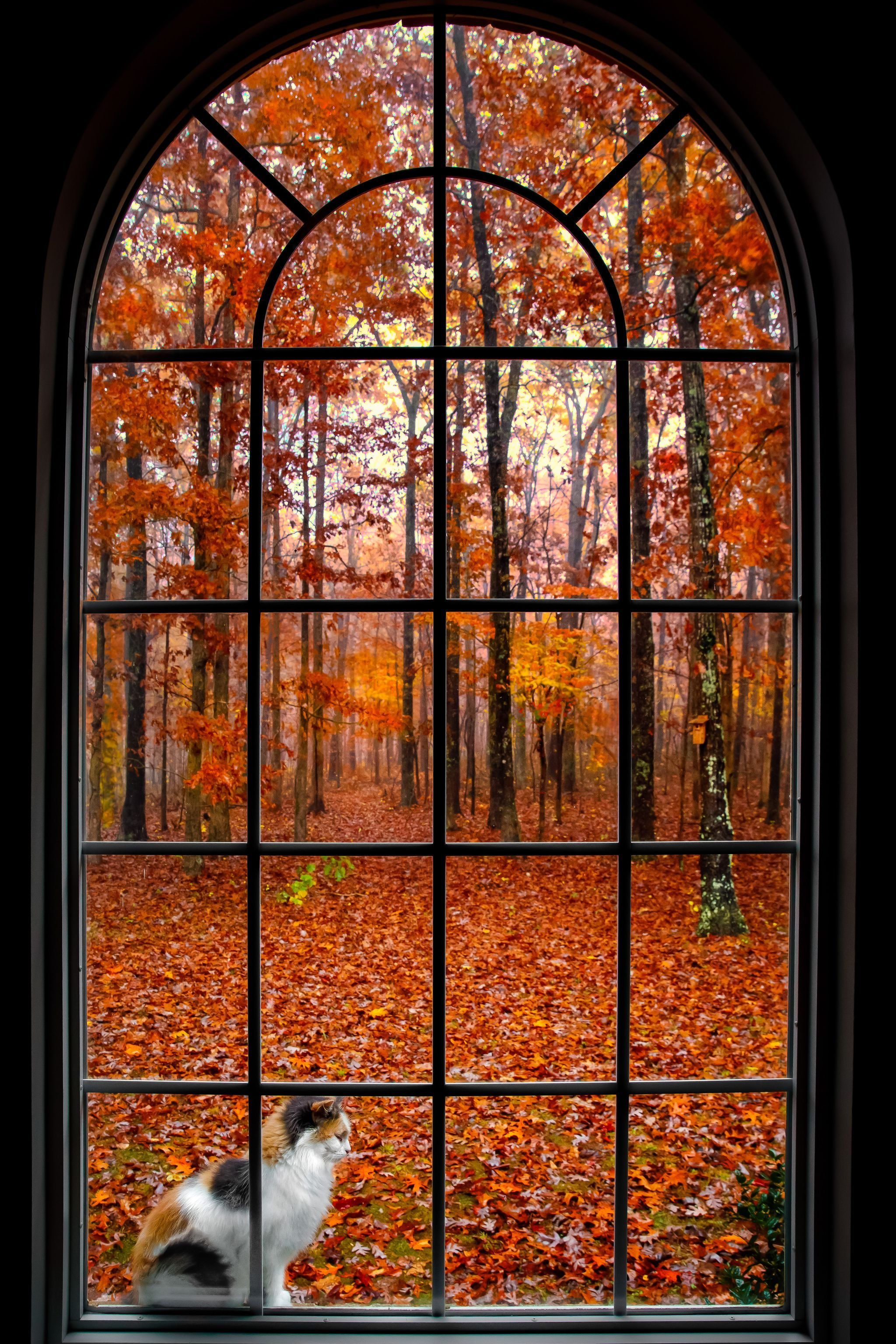Autumn view from a Pipers Chapel in Portland