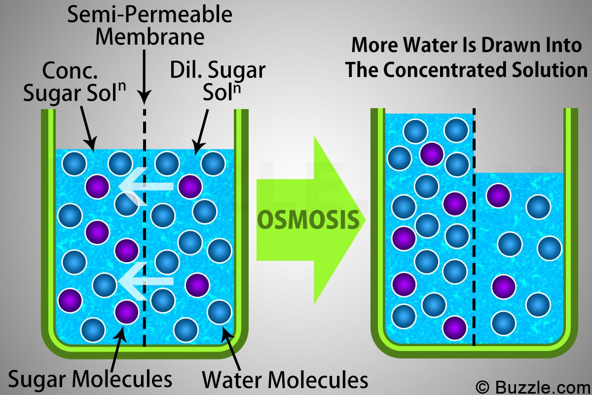 Ever wish you could learn by osmosis? Examples Of Osmosis Osmosis Biology Worksheet Fun Math Activities