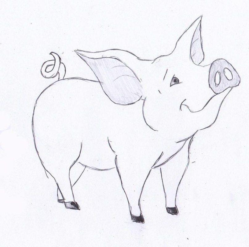 ein schwein zeichnen lernen dekoking com pinteres. Black Bedroom Furniture Sets. Home Design Ideas