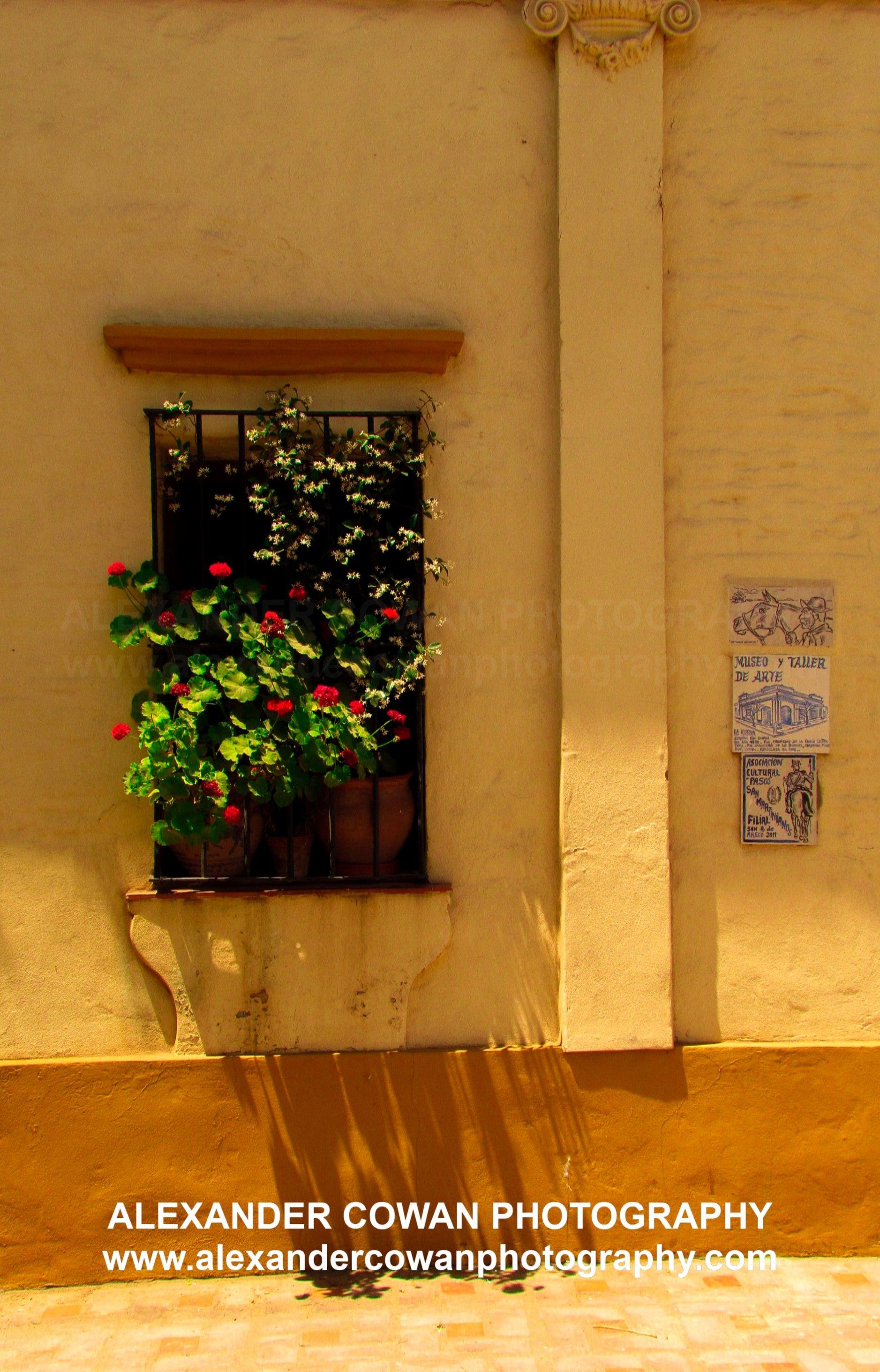 Calling of flowers flowers san antonio de areco