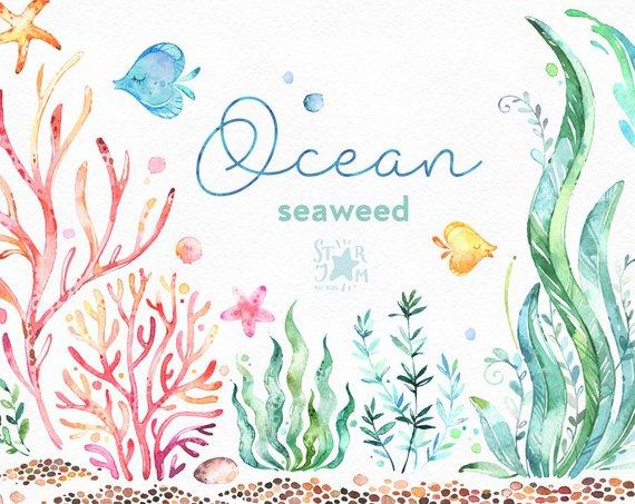 Photo of Ocean. Seaweed. Underwater watercolor clip art, water plants, seaware, fishes, starfish, sea, nautical, undersea, aquarium, babyshower, alga