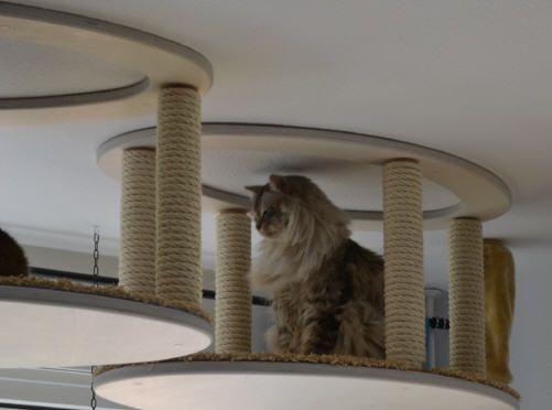 Designer Natur-Kratzbäume Und Katzenzimmer