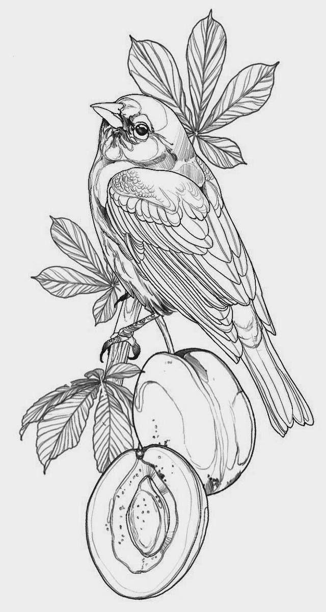Sketch Of Tattoo With Bird And Fruit Bird Drawings Tattoo Design Drawings Bird Sketch