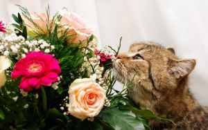 Preview wallpaper cat, flower, flowers, smell