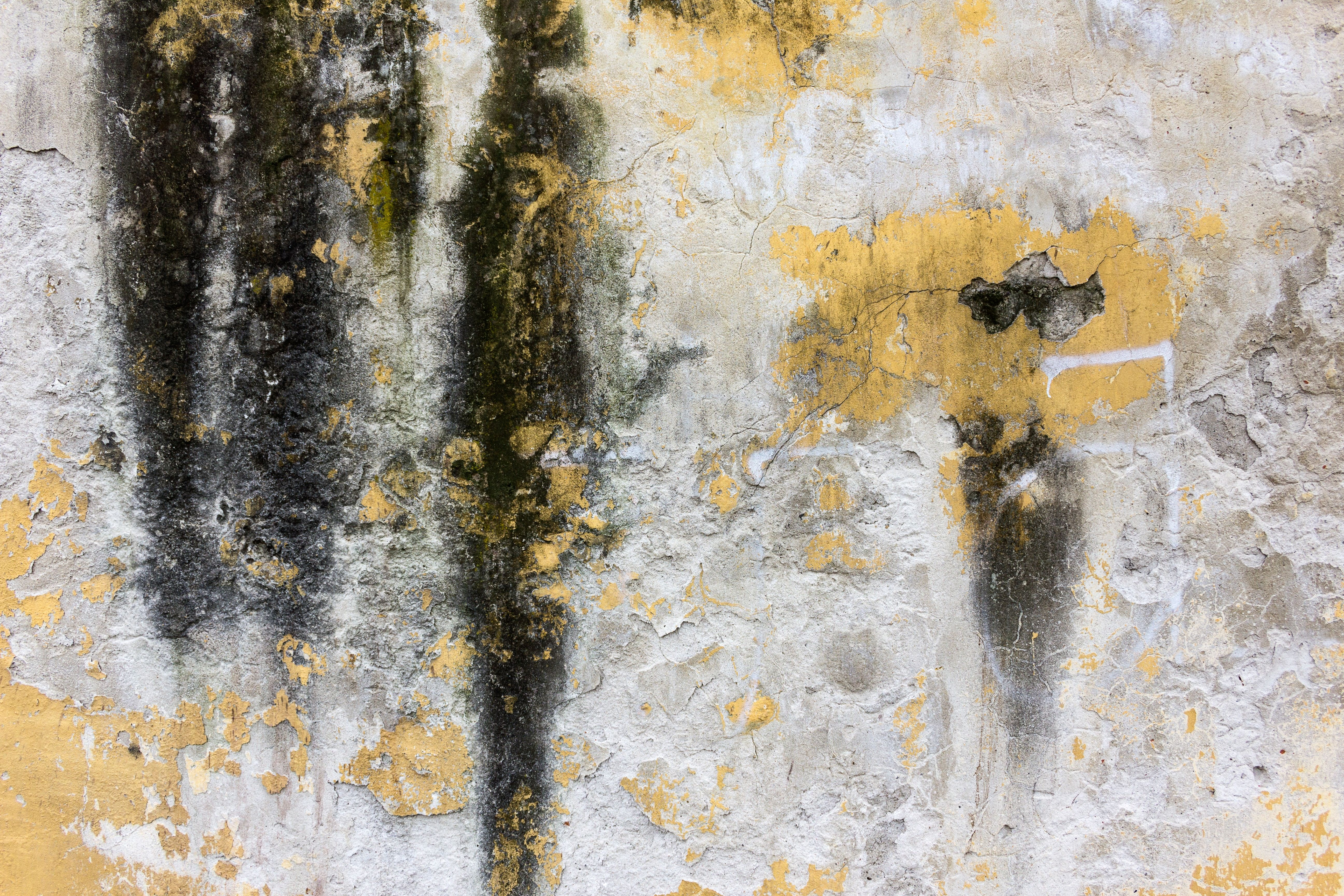 Florida Mold Inspection And Mold Removal Mold Damage Restoration Servicemaster Cool Backgrounds Hd Abstract Photos Free Textures
