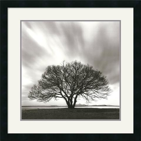 The Mercurial Nature Of The Sky Is In Sharp Contrast To The Strength And Fortitude Of The Tree; Thought Provoking, Dramatic And Beautiful This Work Of Art Will Make A Welcome Addition To Anyones Home