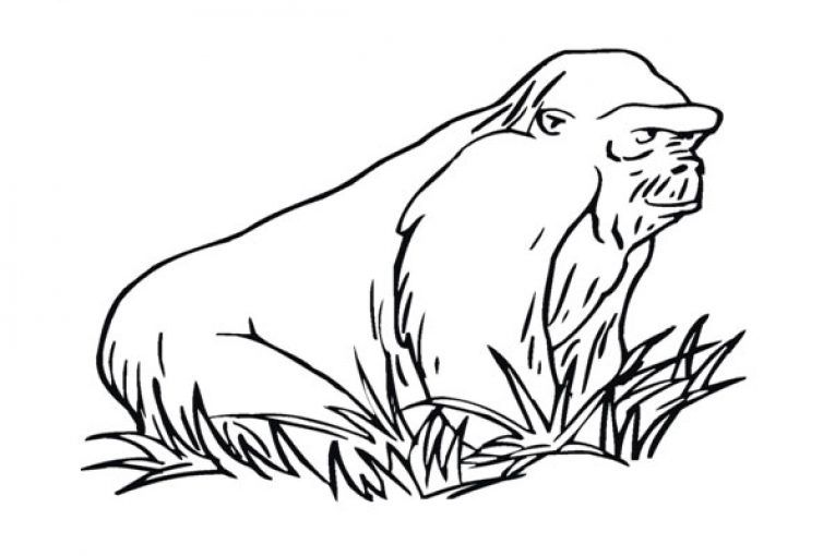 Gorilla On The Grass Coloring Page Coloring Pages Western