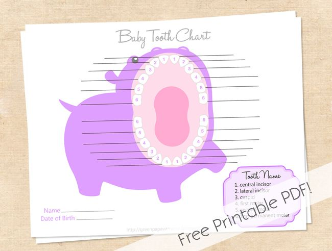 Baby Teeth Chart Printable  Free Printable Tooth Chart  Clip Art