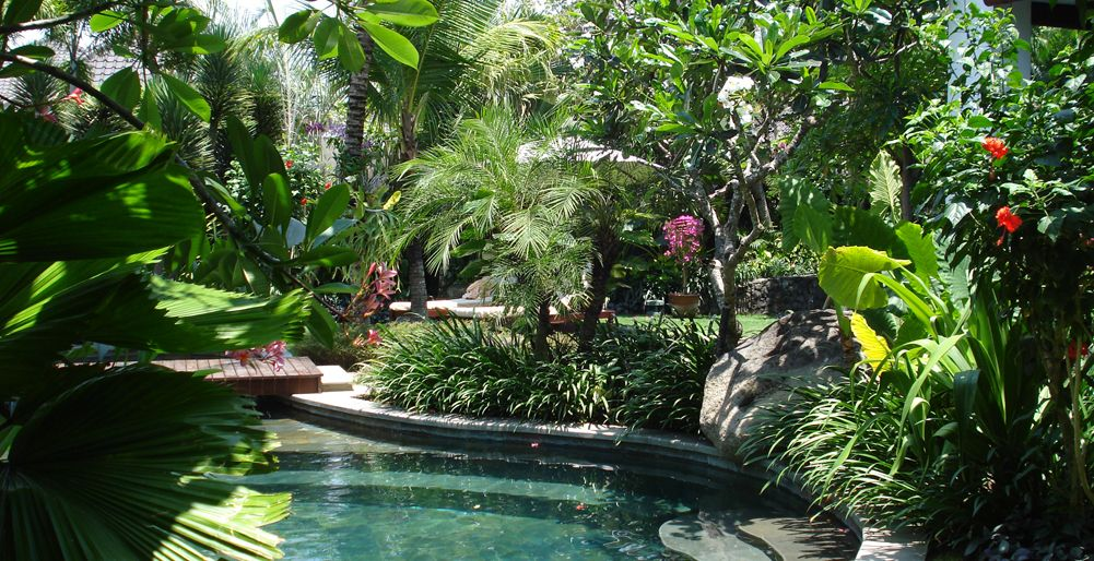 Sub Tropical Garden Design Ideas Google Search Tropical