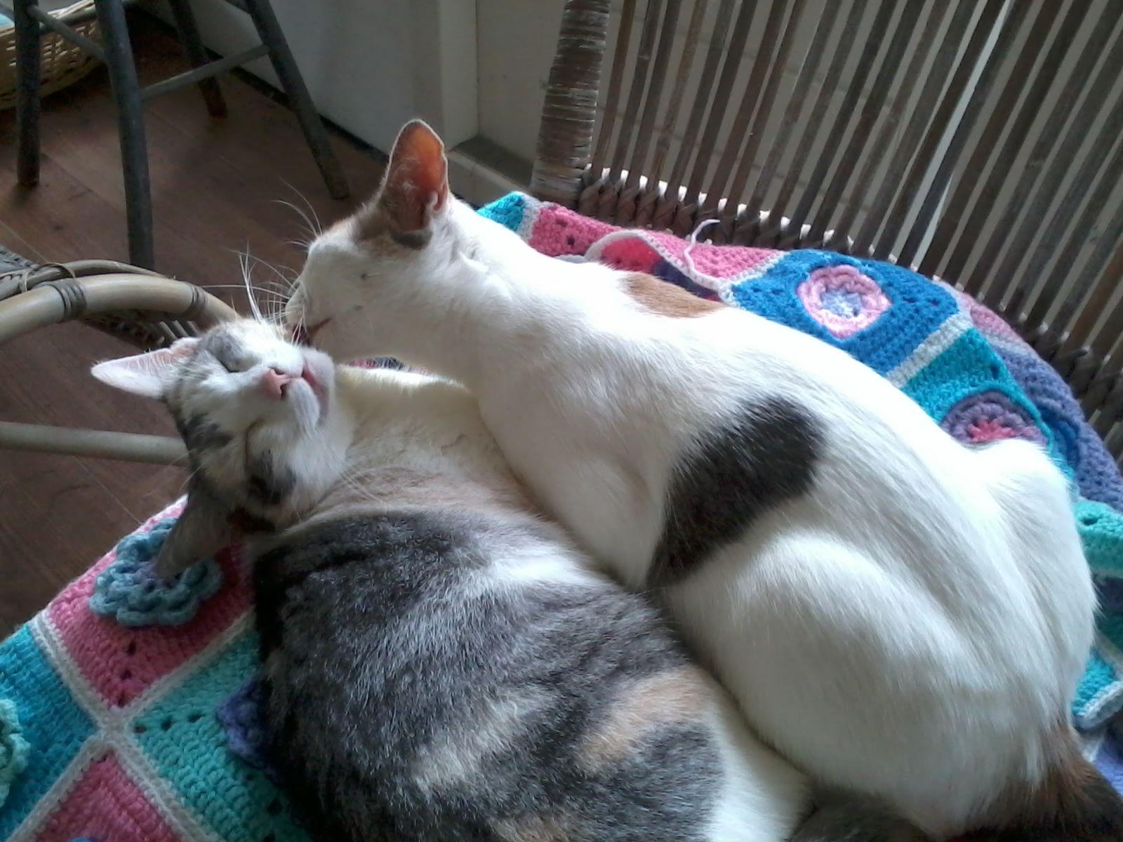 Sweet Guusje and Nina