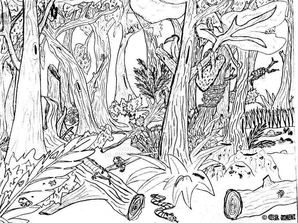 hard Forest Animals Coloring Pages | Forest color pages - Coloring ...