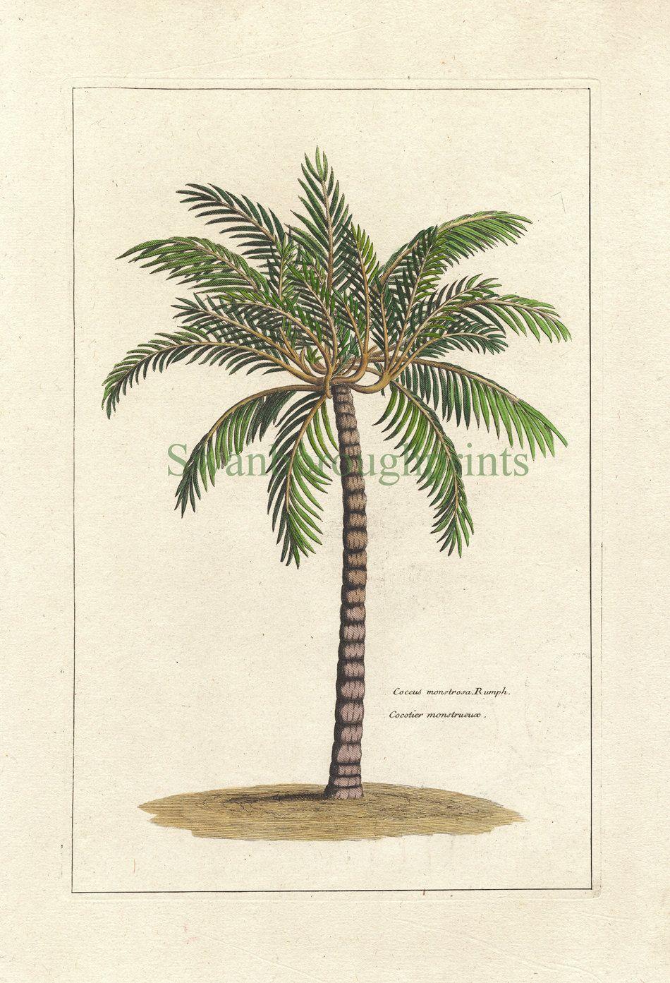 72a95691b Tropical Palm Tree Art Print - Natural History - Vintage 8 x 10 Beach.  $15.00, via Etsy.