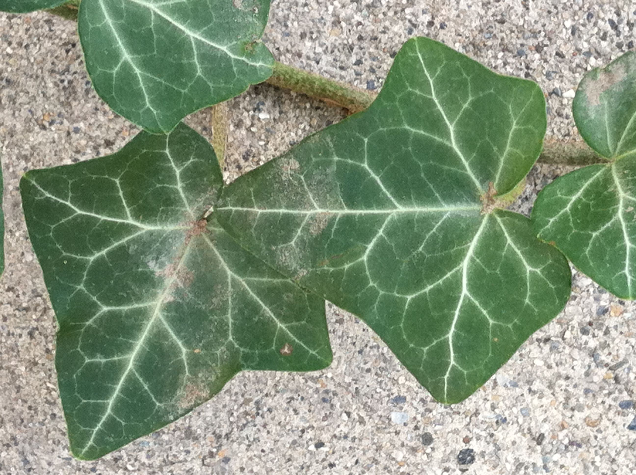 Park Art|My WordPress Blog_How To Get Rid Of Spider Mites In Flower Beds