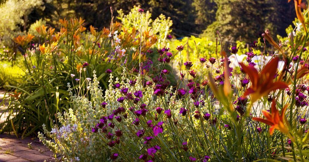 Consejos tiles para dise ar tu propio jard n plantas red facilisimo jardiner a huerto y - Utiles de jardineria ...