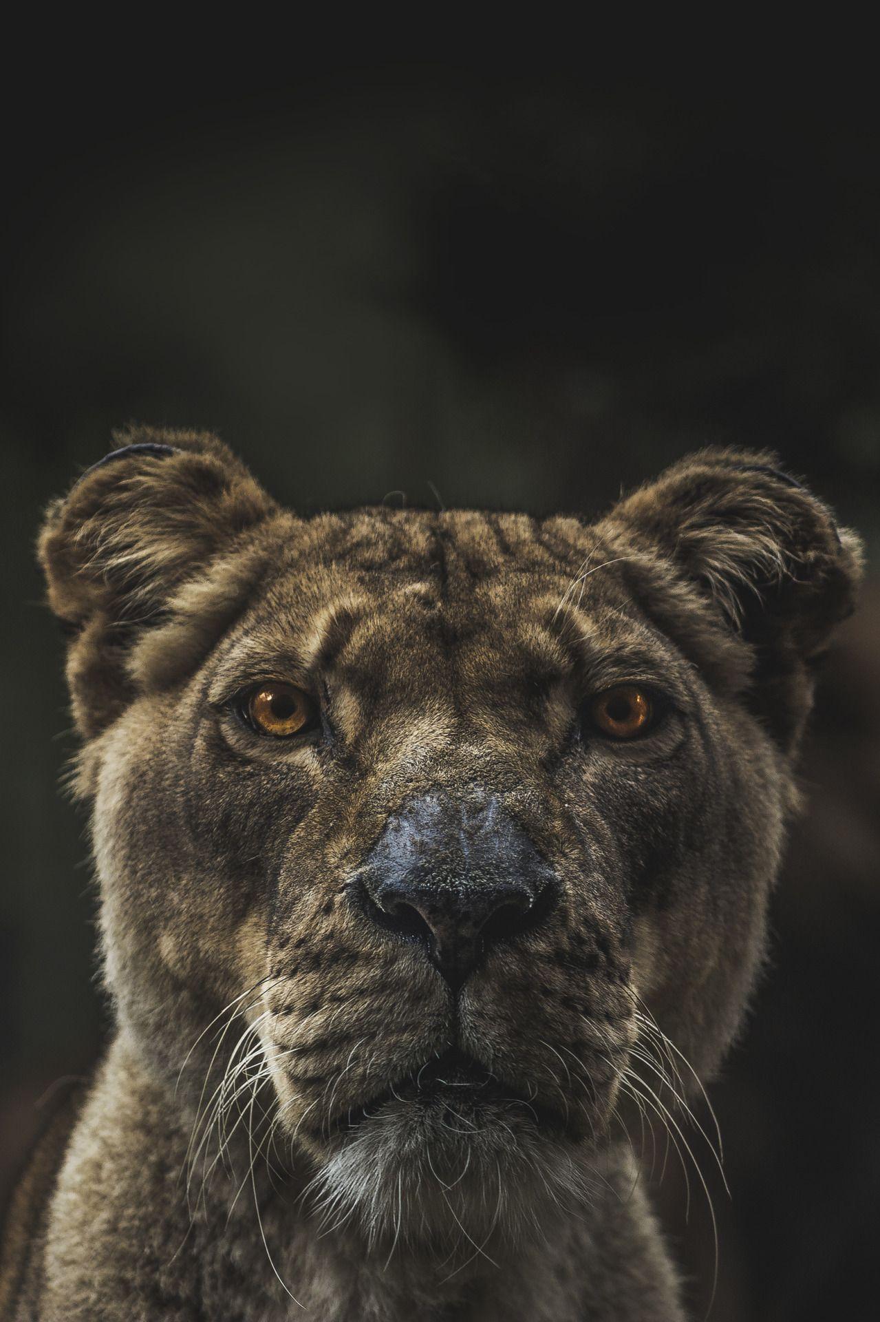 Envyavenue If Looks Could Kill By Sam Scrimshaw Tiere Niedliche Tiere Susseste Haustiere