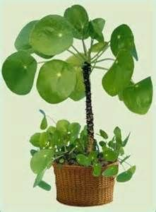 plants windowless bathroom yahoo image search results gardening plants bathroom plants. Black Bedroom Furniture Sets. Home Design Ideas