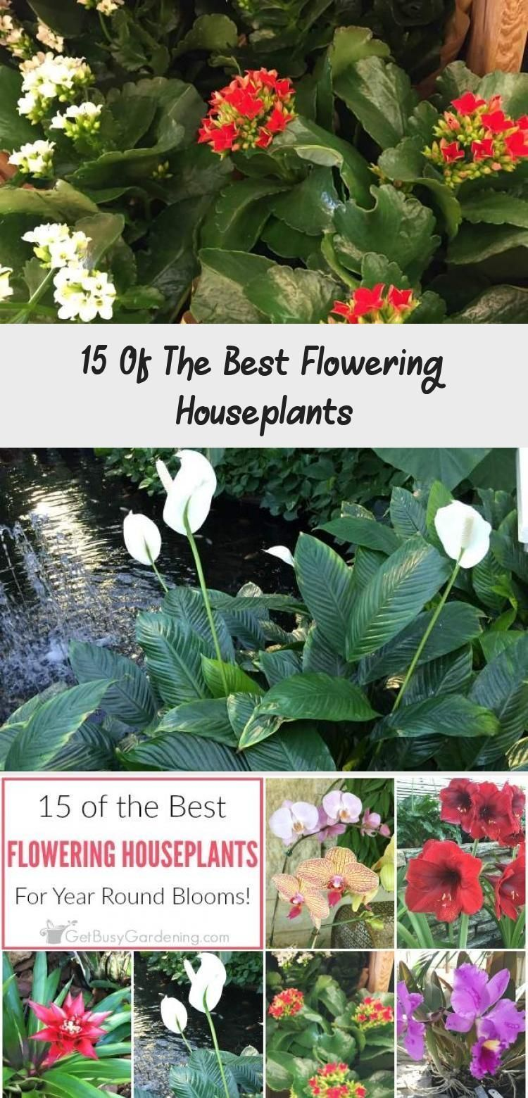 Grow beautiful flowering houseplants in planters all year round …#beautiful #f… – Vine Ideas