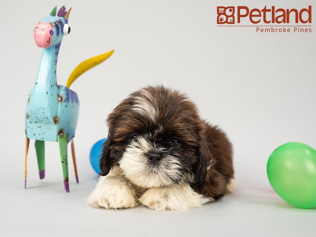 Park Art|My WordPress Blog_Pets For Sale In Michigan Craigslist