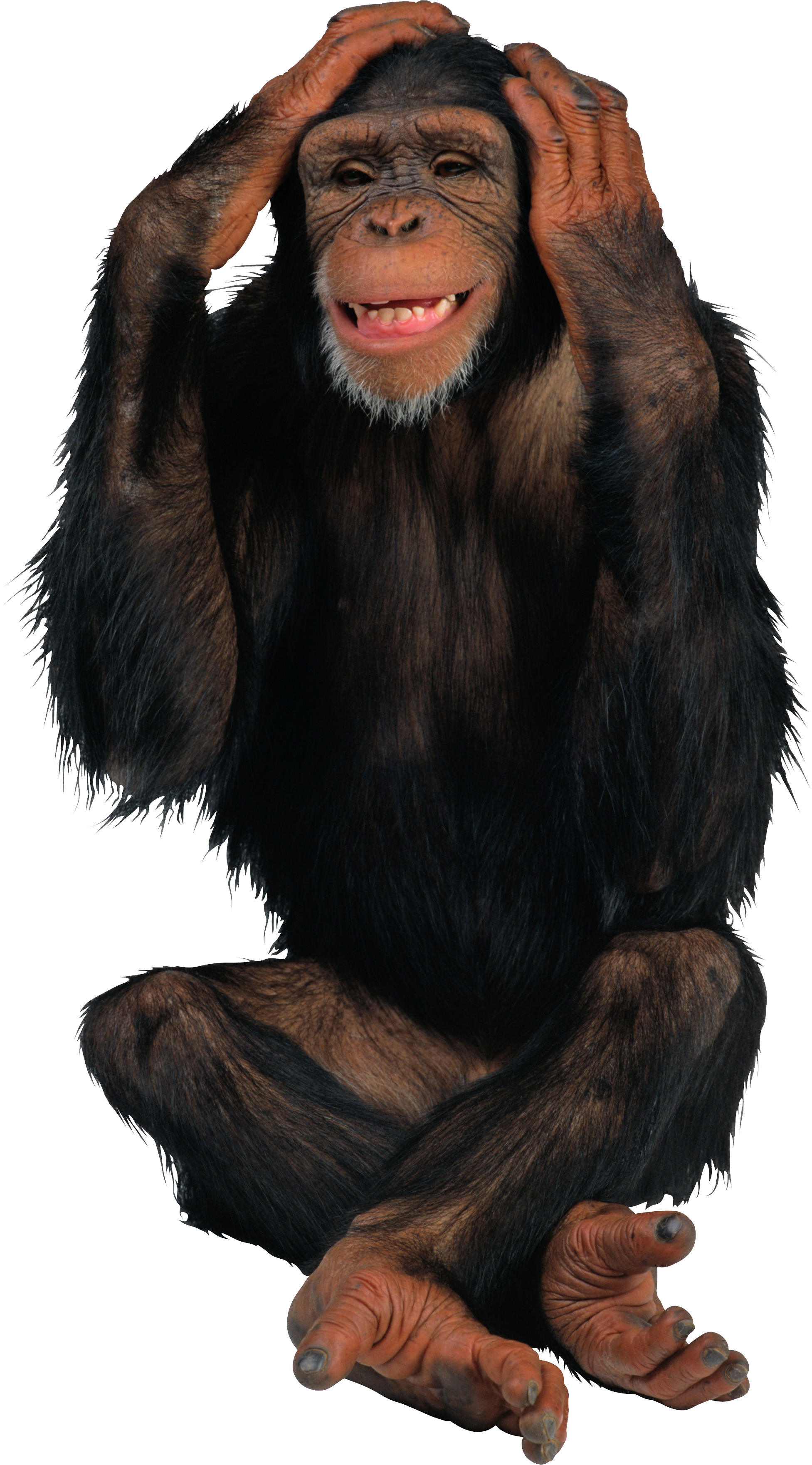 Monkey PNG Monkey face